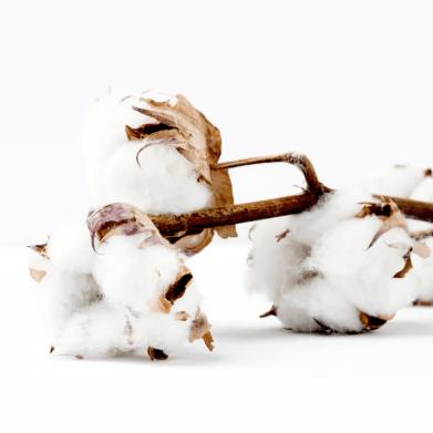 Materialien_Bio-Baumwolle